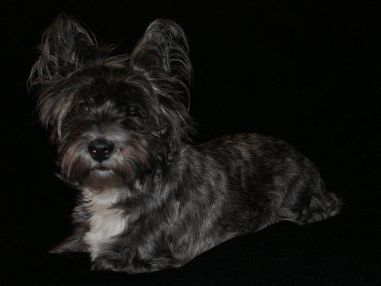Tinker the Terrier