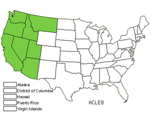 Native States for Lemmon's Needlegrass (Achnatherum Lemmonii)