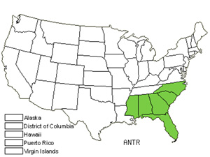 Native States for Tracy&#8217;s Bluestem (Andropogon Tracyi)