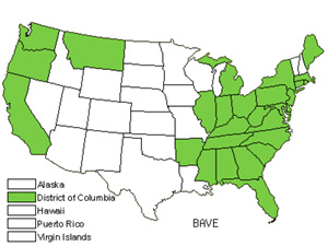 Native States for Early Yellowrocket (Barbarea Verna)