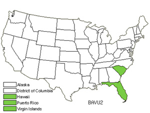 Native States for Common Bamboo (Bambusa Vulgaris)
