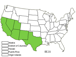Native States for Sweetbush (Bebbia Juncea)