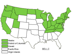 Native States for Bellis (Bellis)