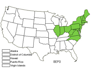 Native States for Gray Birch (Betula Populifolia)