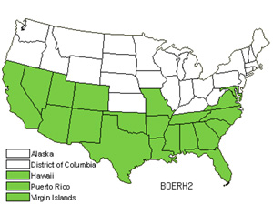 Native States for Spiderling (Boerhavia)