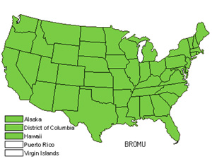 Native States for Brome (Bromus)