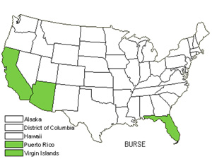 Native States for Bursera (Bursera)