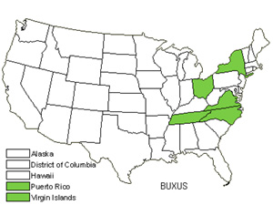 Native States for Boxwood (Buxus)