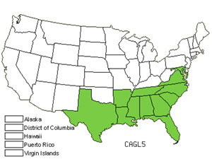 Native States for Southern Waxy Sedge (Carex Glaucescens)