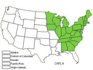 Native States for Plantainleaf Sedge (Carex Plantaginea)