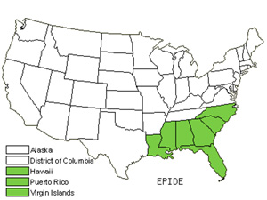Native States for Star Orchid (Epidendrum)