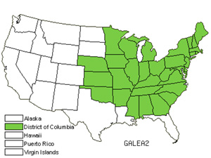 Native States for Galearis (Galearis)