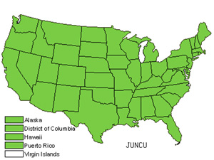 Native States for Rush (Juncus)
