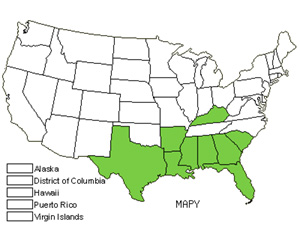 Native States for Pyramid Magnolia (Magnolia Pyramidata)