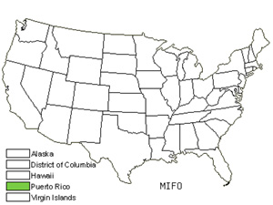Native States for Puerto Rico Johnnyberry (Miconia Foveolata)