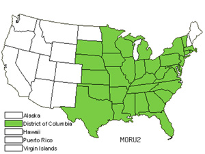 Native States for Red Mulberry (Morus Rubra)