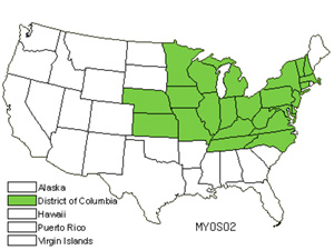 Native States for Myosoton (Myosoton)