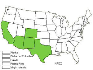 Native States for Wishbone Fiddleleaf (Nama Dichotomum)