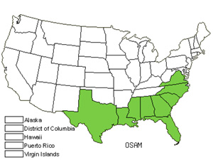 Native States for Devilwood (Osmanthus Americanus)