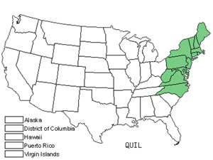 Native States for Bear Oak (Quercus Ilicifolia)