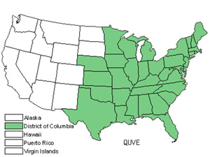 Native States for Black Oak (Quercus Velutina)