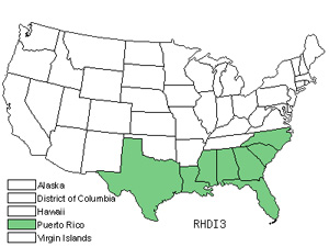 Native States for Spreading Beaksedge (Rhynchospora Divergens)
