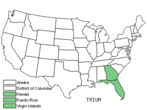 Native States for Burbark (Triumfetta)