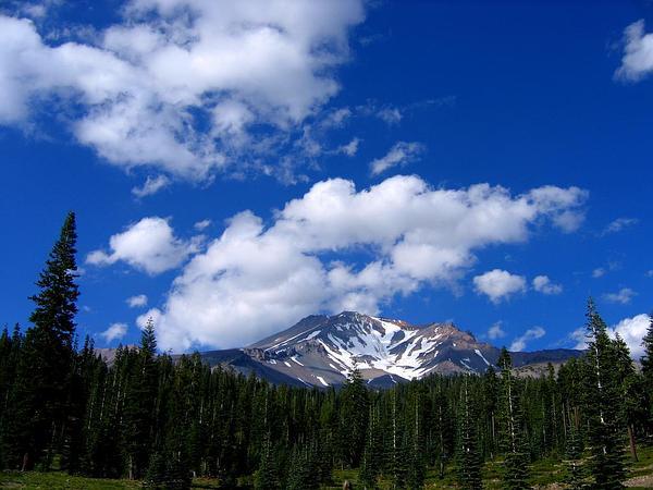California Red Fir (Abies Magnifica) http://www.sagebud.com/california-red-fir-abies-magnifica