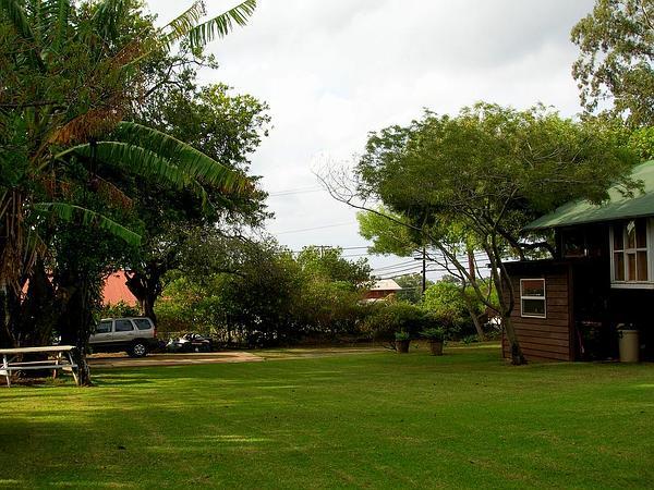 Koaoha (Acacia Koaia) http://www.sagebud.com/koaoha-acacia-koaia