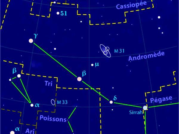Bog Rosemary (Andromeda) http://www.sagebud.com/bog-rosemary-andromeda/
