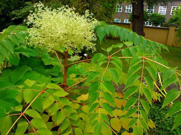 sagebud grow your garden plant a tree pot a flower. Black Bedroom Furniture Sets. Home Design Ideas