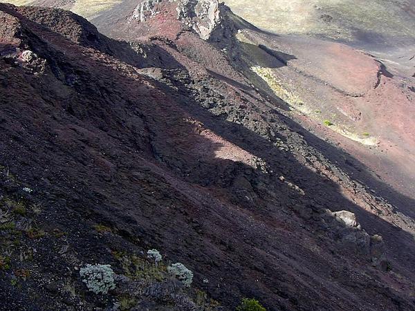 Maui Wormwood (Artemisia Mauiensis) http://www.sagebud.com/maui-wormwood-artemisia-mauiensis