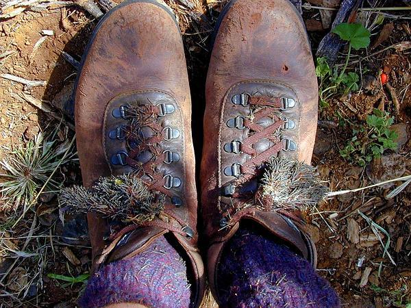 Beggarticks (Bidens) http://www.sagebud.com/beggarticks-bidens