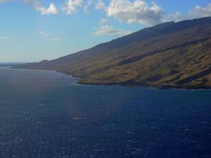 Mauna Loa Beggarticks