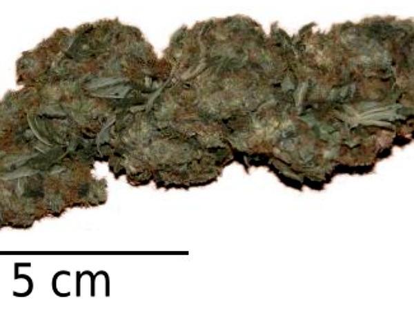 Marijuana (Cannabis Sativa) http://www.sagebud.com/marijuana-cannabis-sativa/