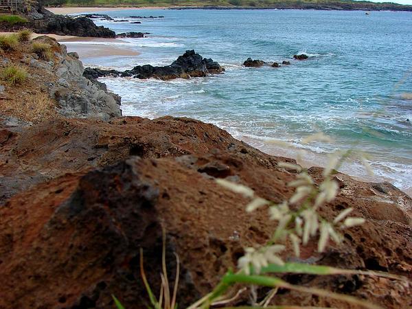 Stinkgrass (Eragrostis Cilianensis) http://www.sagebud.com/stinkgrass-eragrostis-cilianensis