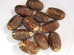 Barbados Nut