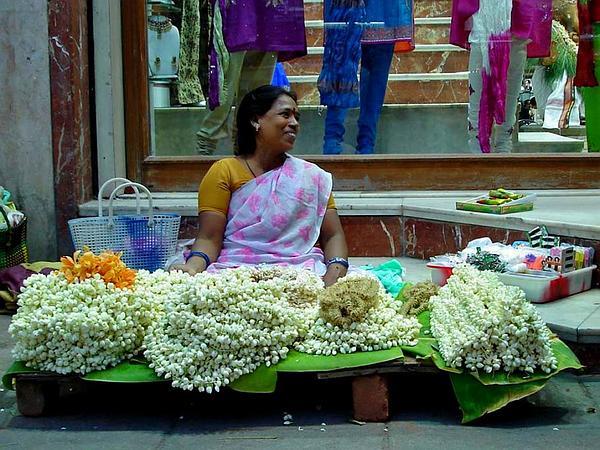Poet's Jasmine (Jasminum Officinale) http://www.sagebud.com/poets-jasmine-jasminum-officinale/