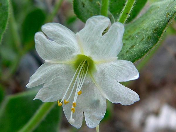 Sagebud grow your garden plant a tree pot a flower sow a seed mightylinksfo