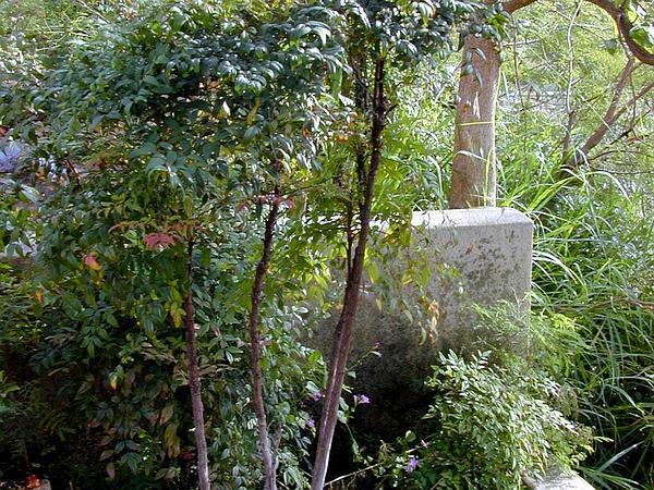 Sacred Bamboo (Nandina Domestica) http://www.sagebud.com/sacred-bamboo-nandina-domestica/