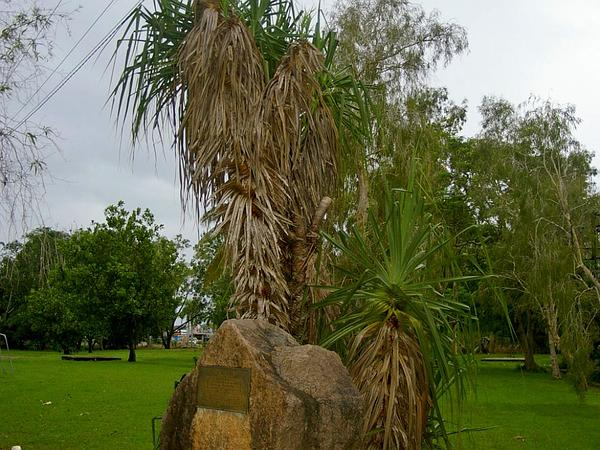 Screwpine (Pandanus) http://www.sagebud.com/screwpine-pandanus