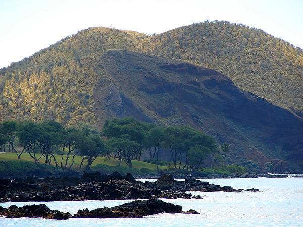 Maui Panicgrass (Panicum Pellitum) http://www.sagebud.com/maui-panicgrass-panicum-pellitum