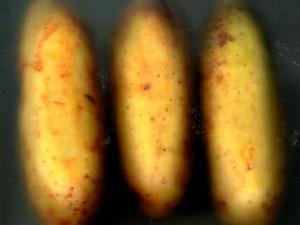 Banana Poka