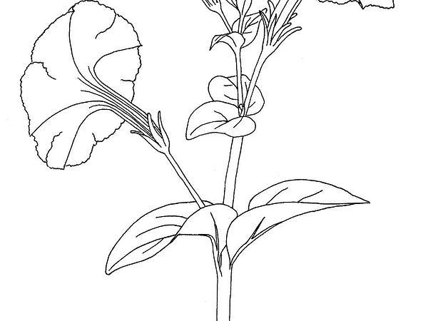 Sagebud grow your garden plant a tree pot a flower sow a seed petunia petunia httpsagebudpetunia ccuart Choice Image