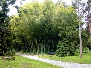 Tortoiseshell Bamboo