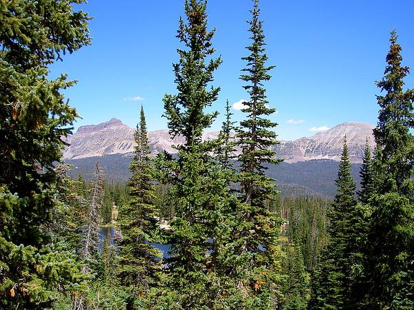 how to grow plants and trees in sub alpine climate