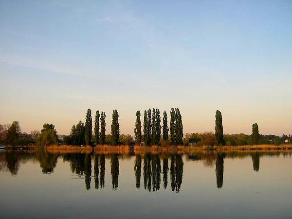Lombardy Poplar (Populus Nigra) http://www.sagebud.com/lombardy-poplar-populus-nigra