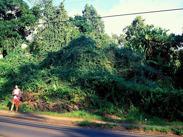 Poranopsis (Poranopsis) http://www.sagebud.com/poranopsis-poranopsis