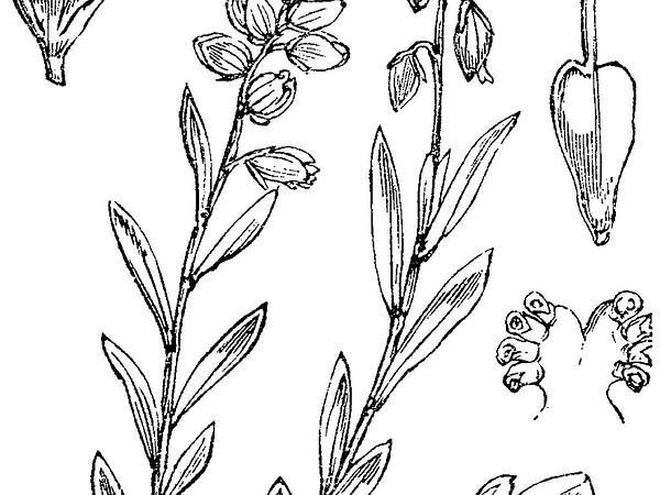 Common Milkwort (Polygala Vulgaris) http://www.sagebud.com/common-milkwort-polygala-vulgaris
