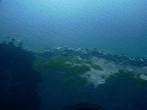 Hawai'I Pritchardia (Pritchardia Affinis) http://www.sagebud.com/hawaii-pritchardia-pritchardia-affinis/